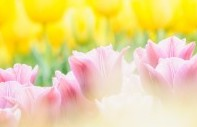 春の病、五月病